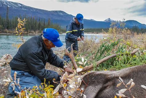 Arctic Indigenous food culture takes the day at