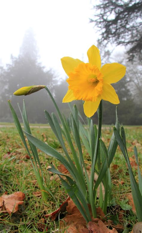 Garden Therapy: Nature and Daffodils