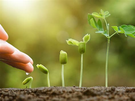 CI Investments adds ESG-focused funds | Investment Executive