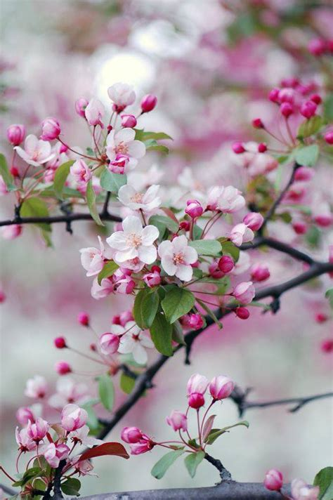 Refreshing Colors of Spring Nature - XciteFun