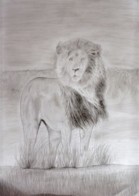 16+ Stunning Collection Of Lion Drawing   Design Trends