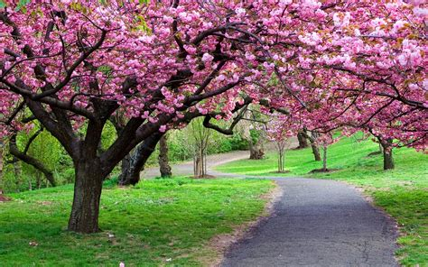 Ppark Green Grass, Blooming Trees, Pink Flowers From