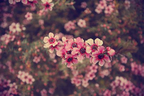 Vintage Flower Tumblr Quotes Wallpaper Mobile » Outdoors