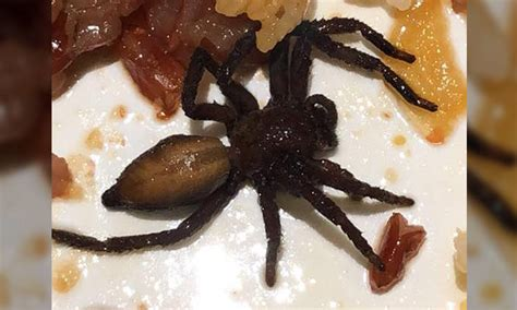 Aloha Poke apologises after woman finds dead spider